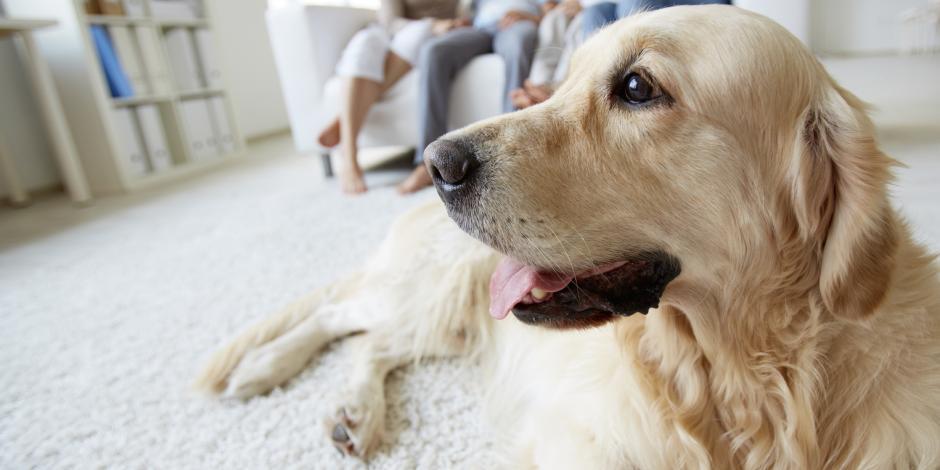 family with dog in living room near Sacramento California